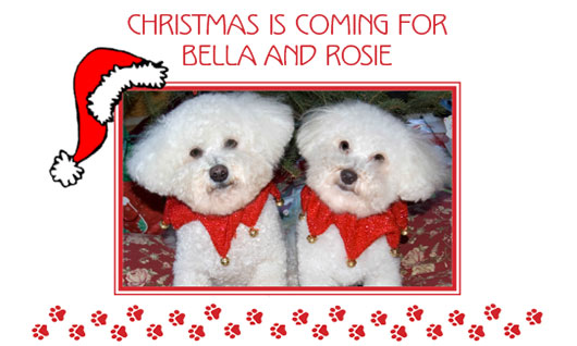 Christmas is Coming for Bella and Rosie thumbnail