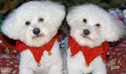 Bella and Rosie decked out for the holidays