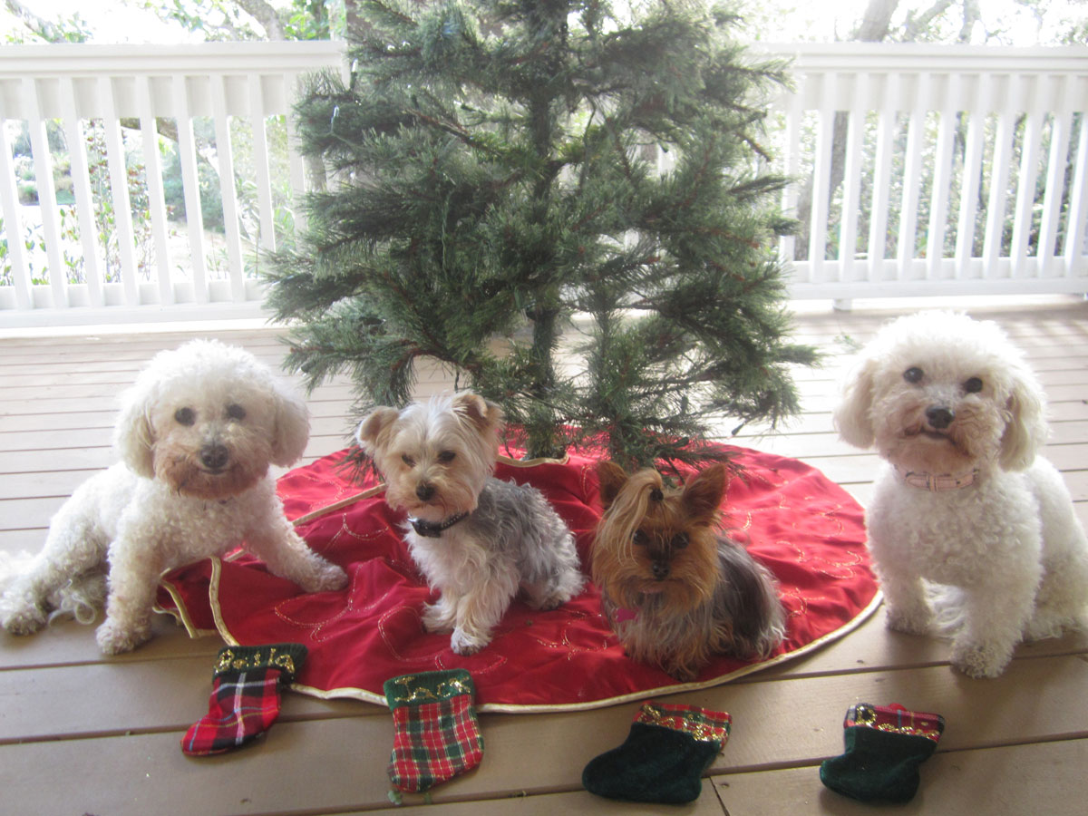 Stockings for Bella, Rosie, Daisy and Jack